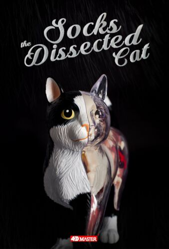 4D Master @ Jason Freeny Anatomy Dissected Cat For Home Deco New