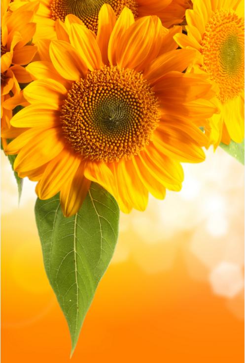 3D SonnenBlaumen 714 Tapete Wandgemälde Tapete Tapete Tapete Tapeten Bild Familie DE Summer | Neueste Technologie  | Verpackungsvielfalt  | Lass unsere Waren in die Welt gehen  e980f0