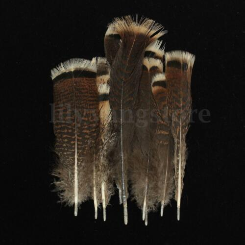 10 PCS Natural Precious Wild Turkey Tail Feathers 6-8 Inches 15-20 cm