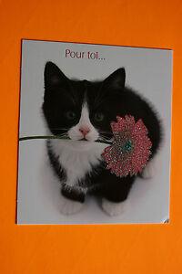 Détails Sur Carte Postale Bon Anniversaire Pour Toichat Chaton Enveloppe Blanche 104