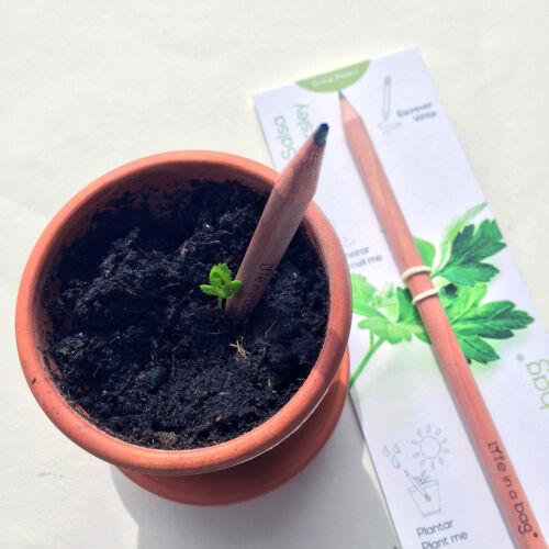 Grow Pencil Ökologischer Bleistift zum einpflanzen Tomate//Basilikum