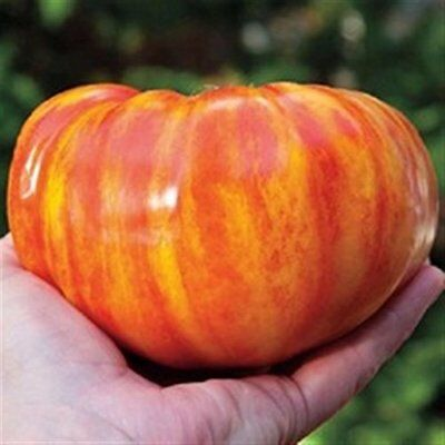 Organic Seeds Heirloom Vegetable Tomato German Striped 30 Seeds