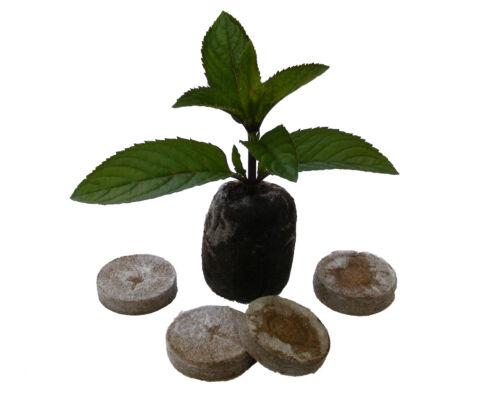 Original Jiffy Torfquelltöpfe 24mm-44mm Torf Anzuchttöpfe Pot Anzucht Grow NEU
