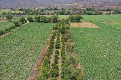 Venta de Huerta de Cítricos, parcela de riego en Ticuman Morelos