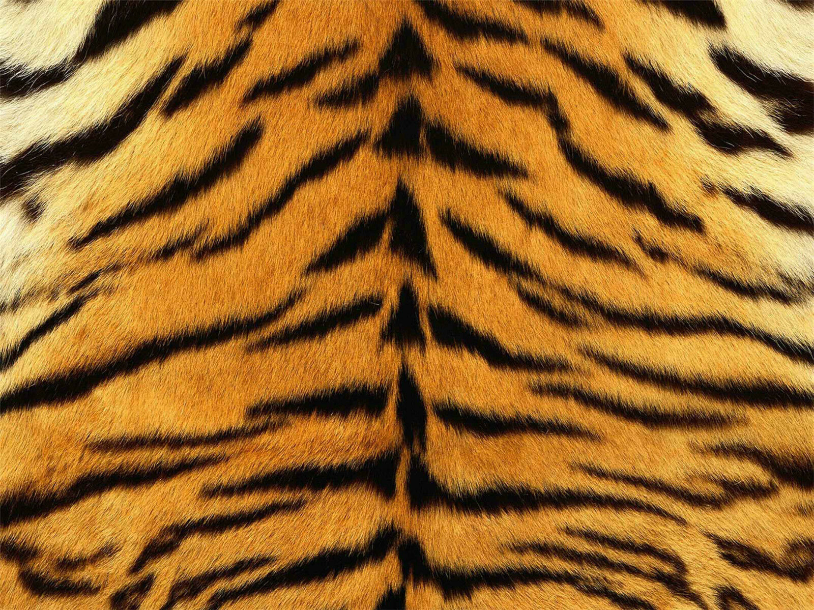 3D Belle Tigre Fourrure 41 Décor Mural AJ Murale De Mur De Cuisine AJ Mural WALLPAPER FR 664e4c