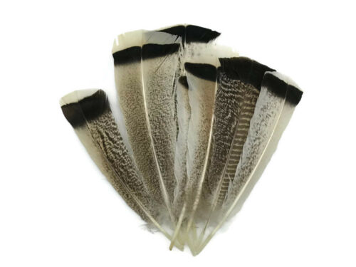 4 Pieces Natural Royal Palm Cream and Black Wild Turkey Tail Feathers Supply
