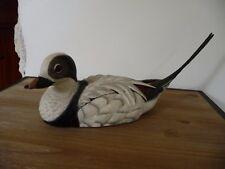 Old squaw winter gosset wildlife collection