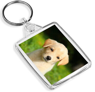 Awesome Golden Retriever Dog Keyring IP02 Puppy Lover Cool Gift #16869