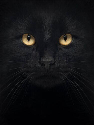 ART PRINT POSTER PHOTO CLOSE UP PET BLACK CAT FACE EYES LFMP0241