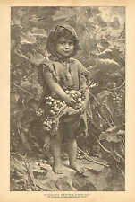 Child, Picking Grapes, Vineyard, Peasant, Vintage 1892 German Antique Art Print
