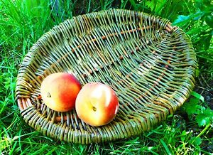 Make-a-Willow-Frame-Basket-a-Weaving-Kit-for-Complete-Beginners