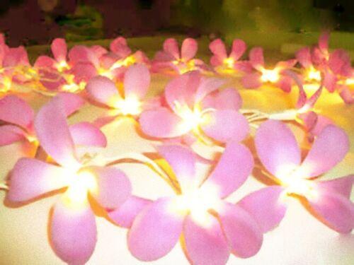 20 Pink Frangipani Flower LED Fairy Light battery power table runner tropical
