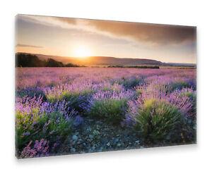 Postereck-Leinwand-2210-Lavendel-Feld-Sonnenuntergang-Landschaft-Natur-lila