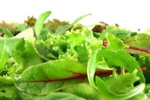 Lettuce-Mixed-Greens-Mesclun-Non-GMO-Heirloom-Vegetable-Seeds-Sow-No-GMO-USA