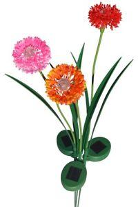 1013o-rpo Oignon Blossom Solaire Fleur Jardin Extérieur Décoration Ensemble Cadeau-afficher Le Titre D'origine Large SéLection;