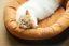 Self-Warming-Cat-Dog-Bed-Cushion-for-Medium-Large-Dogs-Round-Nest-Up-to-88lbs thumbnail 8