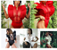 NEW-LADIES-HOLLOW-CLUBBING-RUFFLES-BODYSUIT-1PC-357-US-SELLER-SHIP-FAST