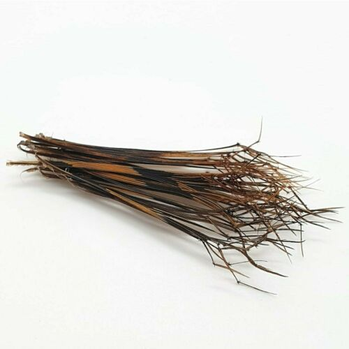 Fly Tying Materials Daddy Hopper 50 Single Knotted Pheasant Tail Legs Natural