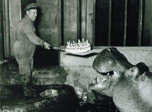 Ansichtskarte-Torte-fuer-das-Nilpferd-zum-Geburtstag-ein-Klassiker