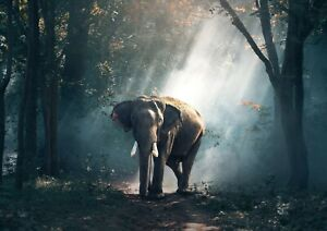 Cool-Forest-Elephant-Poster-Size-A4-A3-Jungle-Wild-Animal-Poster-Gift-13162