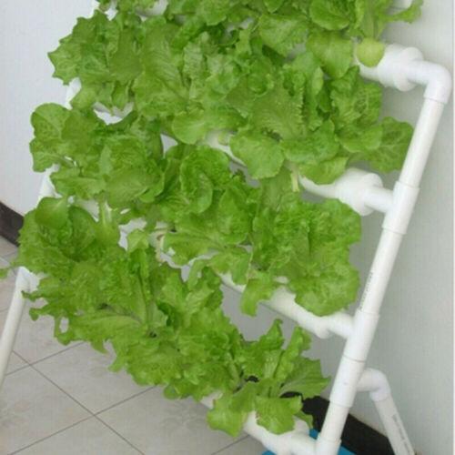 50pcs//Set Vegetable Plant Net Cup Basket Hydroponic System Grow Cylinders Sponge