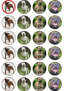 X24 PET STAFFORDSHIRE BULL TERRIER DOG CUP CAKE TOPPERS ON EDIBLE RICE PAPER