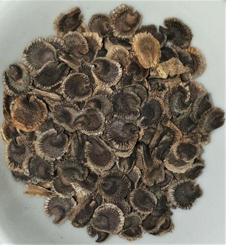 Feigenblättrige Stockrose Alcea ficifolia 40 Samen  MENGENRABATT !!
