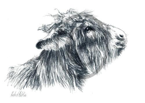 Tierzeichnungen Esel 001 Zeichnung Haustiere Tiere Kunstdruck