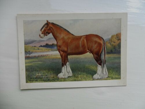 XL size 1923-single cards-Updated!. Players British livestock cards