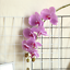 thumbnail 7 - Beautiful-Artificial-Phalaenopsis-Orchid-Flower-Bunch-of-2-White-Pink-Purple