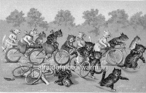 Print 1910s Cats in Bicycle Race