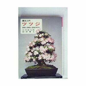 Azalea-Niwaue-potted-bonsai-trees-making-1978-horticulture-Introduction