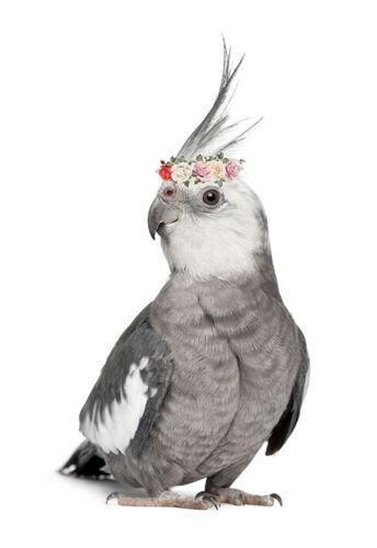 Cockatiel Parrot Watercolour Flowers Roses Bird Canvas Print A3