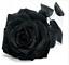 Semillas-rosas-disponible-en-9-tonos-diferentes-10-20-o-30-semillas miniatura 9