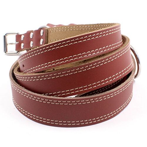 S M L Dogs CoreLife Leather Dog Collar Walking Training Lead Adjustable Buckle