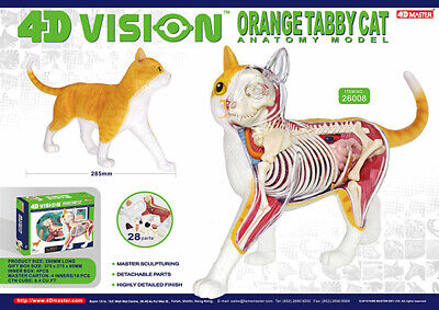 4D Master Vision Cat Skeleton /& Anatomy Model Kit