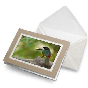 Greetings-Card-Biege-Aracari-Brazilian-Tropical-Bird-21332