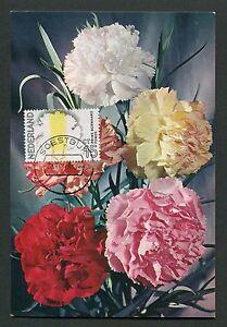 Diligent Pays-bas Mk 1971 Flore Fleurs Œillet Maximum Carte Maximum Card Mc Cm D2908-afficher Le Titre D'origine