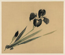 Japanese Flower Prints: Iris: Fine Art Reproduction
