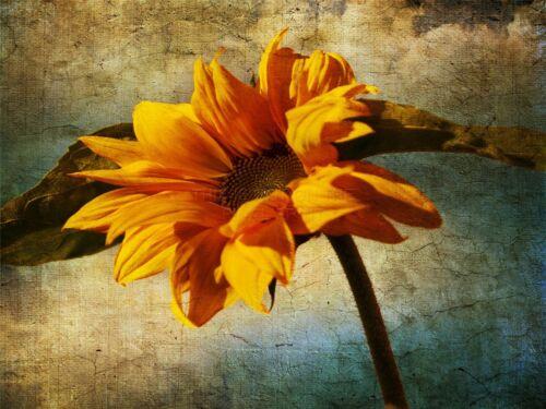 ART PRINT POSTER PHOTO ORANGE FLOWER CRACKED PAINT BACKGROUND LFMP0507