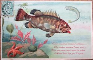 First-of-April-Premier-Avril-1905-Postcard-Starfish-amp-Fish-Color-Litho
