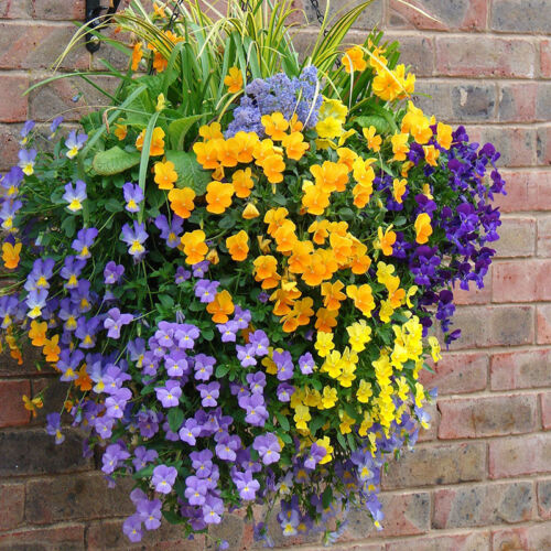 "Easy Fill Hanging Basket Set of 2 x 15/"" Baskets"