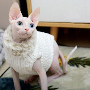 Österreich kaufen sphynx katze Sphynx Katze