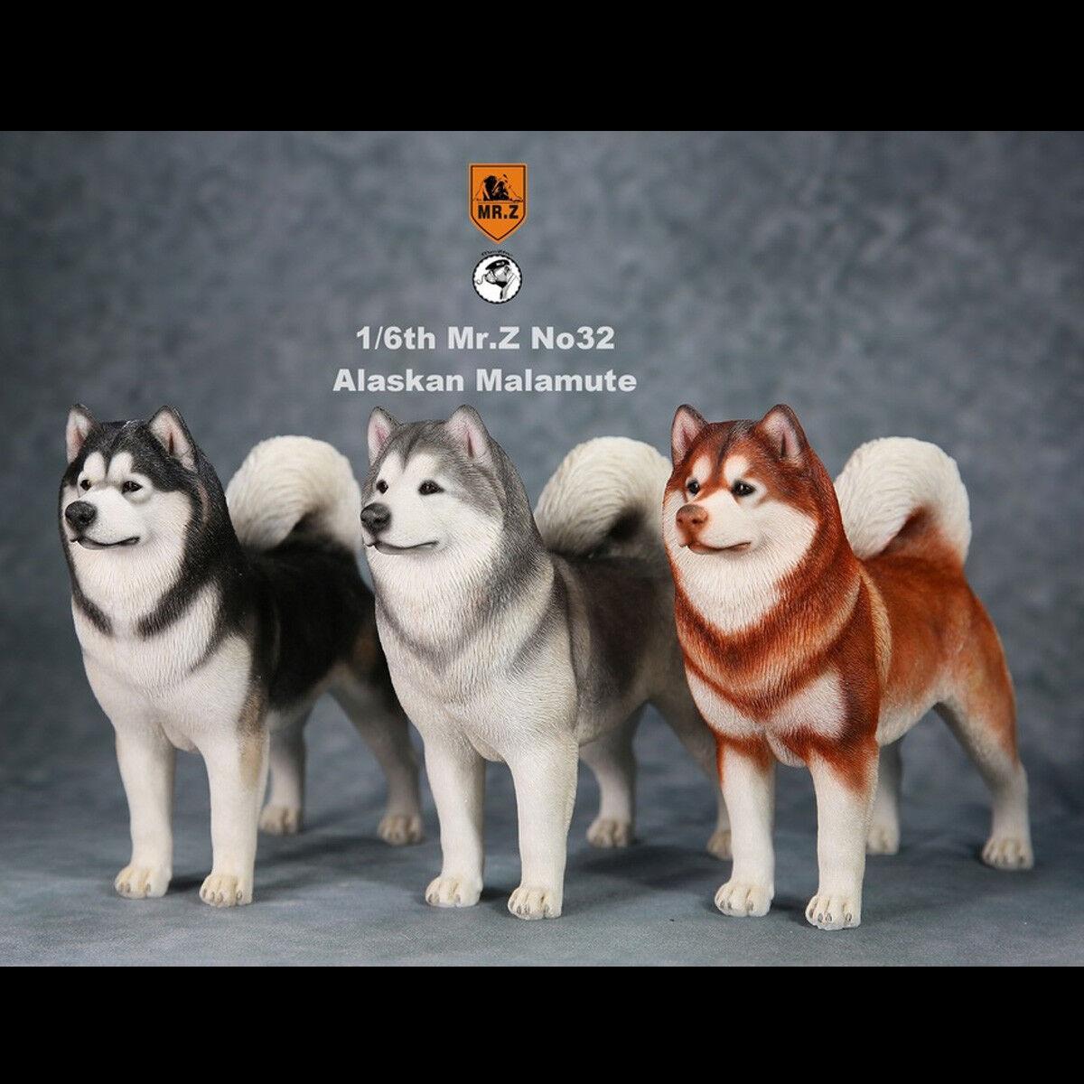 Mr Z 1 6 Alaskan Malamute Dog modellolo Animal cifra giocattoli Available MRZ032