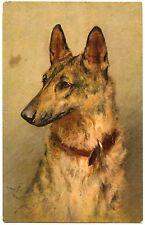 ILLUSTRATEUR SIGNé. PORTRAIT DE CHIEN . BERGER BELGE.  DOG.