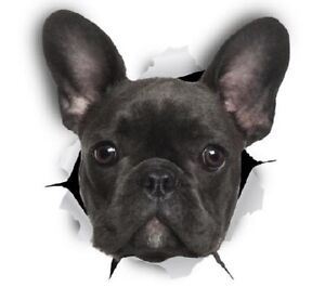 FRENCH-BULLDOG-STICKER-9cm-x-8cm-Dog-Magnet-Available-Free-Aus-Post