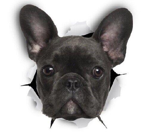 Free Aus Post FRENCH BULLDOG STICKER Magnet Available Dog 9cm x 8cm