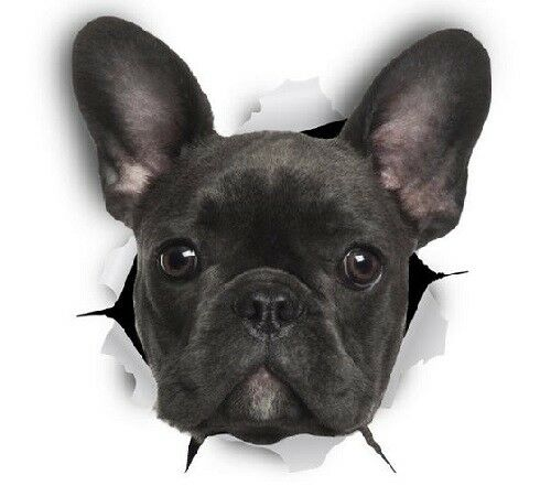 FRENCH BULLDOG STICKER, 9cm x 8cm,  Dog, Magnet Available, Free Aus Post