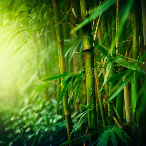 réf 1667 25 dimensions Bambous Sticker mural autocollant déco