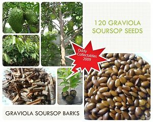 120-GRAVIOLA-SOURSOP-ANNONA-MURICATA-SEEDS-AND-BARKS-FROM-HOME-COLLECTION